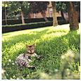 AUB cats #5