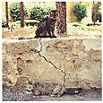 AUB cats #8