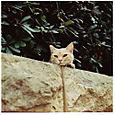 AUB cats #15
