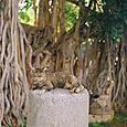 AUB cats #19