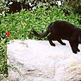 AUB cats #17