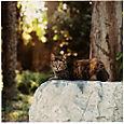 AUB cats #14