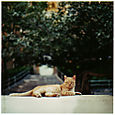 AUB cats #10