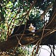 AUB cats #22