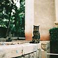 AUB cats #18