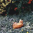 AUB cats #20