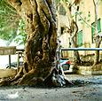 Treeparkinglot