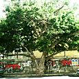 Treeabdulazizmakhoul