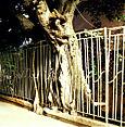 Treetrunkpinkbldg