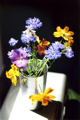 FlowersIndoors001