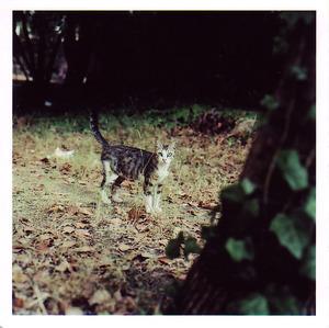 Greeneyedcat_2