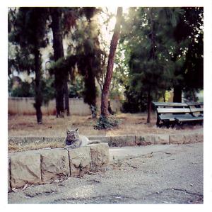 Greycurbcat