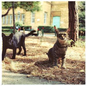 Curiouscats