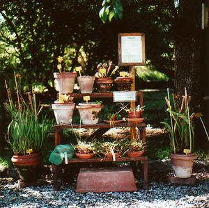 Pisabotanicalcarnivorousplants_2