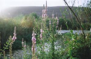 Riverflowers_small