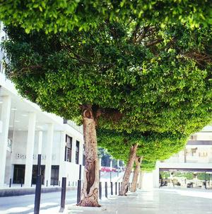 Gefinortrees