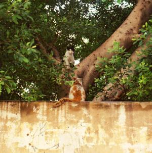Walltreecats_2