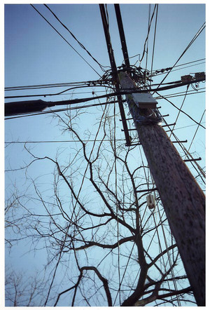 Baltimoretrees001