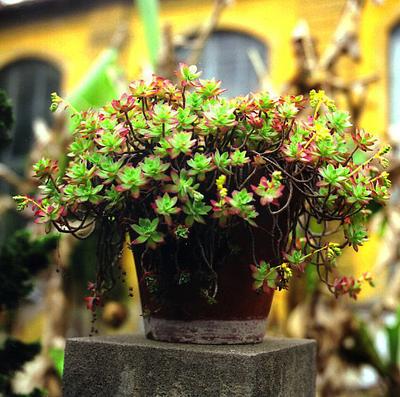 Florencebotanicalgarden002_2