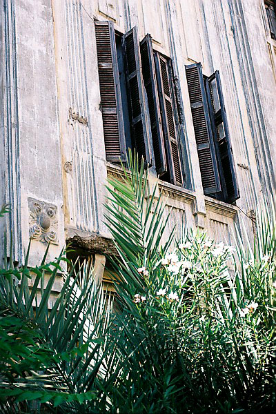 white oleandar bush and building