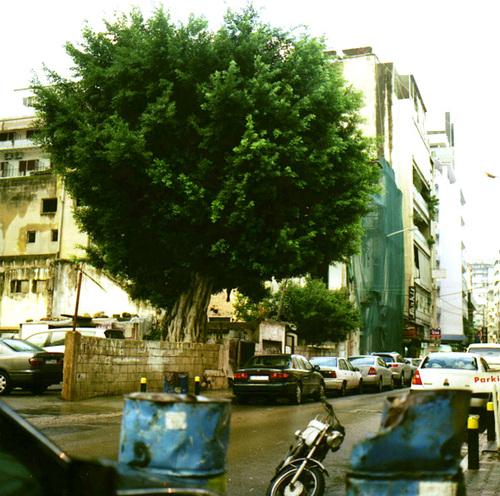 Takoushtree